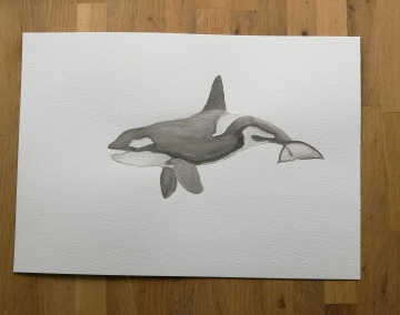 A killer whale in watercolour