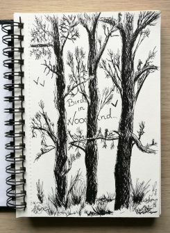 Birds in woodland (felt pen)