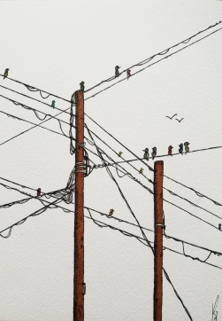 Birds on powerline
